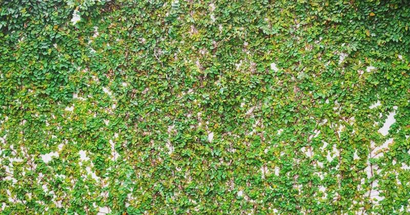 Algol Chemicals - Green Coatings